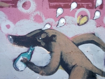 Coati Bebedor - detalle