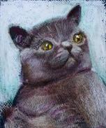 internet Cats